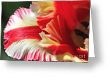 Flaming Parrot Tulip Greeting Card