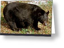 Florida Black Bear Greeting Card