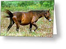 Florida Spanish Horse Greeting Card