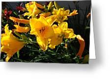 Flower In Idaho Falls Greeting Card