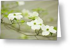 Flowering Dogwood (cornus Florida) Greeting Card