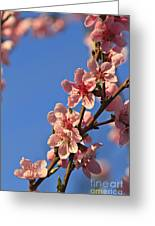 Flowering Peach Tree Greeting Card