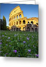 Flowers At The Coliseum Greeting Card