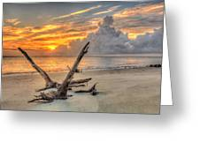 Folly Beach Driftwood Greeting Card