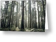 Forest Greeting Card by Bernard Jaubert