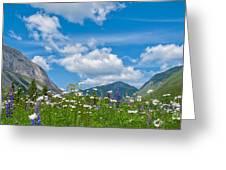 Franconia Notch - Lupine And Daiseys  Greeting Card