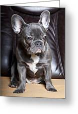 French Bulldog Greeting Card by Falko Follert
