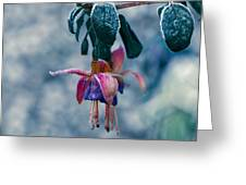 Frozen Garden Greeting Card