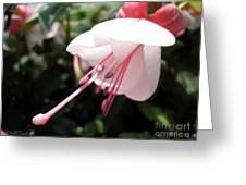 Fuchsia Named Liebelei Greeting Card