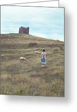 Girl With Sheeps Greeting Card