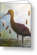 Glossy Ibis Greeting Card by Sharon Burger