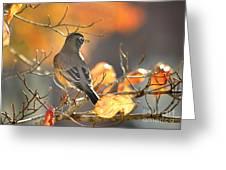 Glowing Robin Greeting Card