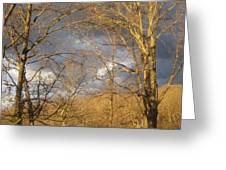 God Made Trees Greeting Card
