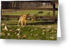 Golden Retriever Pup Greeting Card by Linda Freshwaters Arndt