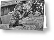 Gorilla Eats Black And White Greeting Card