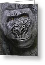Gorilla Portrait Greeting Card by David Hawkes