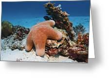 Granulated Seastar Greeting Card