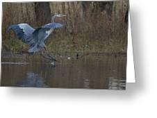 Great Blue Water Landing Greeting Card