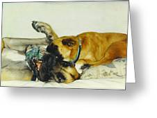 Great Dane And Australian Sheperd Greeting Card