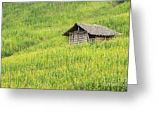 Green Corn Field Greeting Card