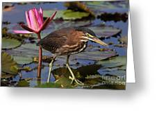 Green Heron Photo Greeting Card