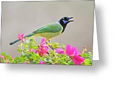 Green Jay (cyanocorax Yncas Greeting Card