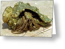 Green Striped Hermit Crab Greeting Card
