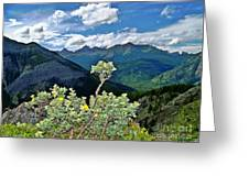 Hardy Shrub Greeting Card