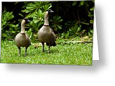 2 Hawaiian Nene Geese Greeting Card