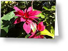 Hawaiiana 5 Greeting Card