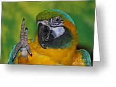Hello... Greeting Card