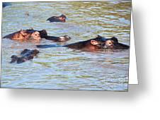 Hippopotamus Group In River. Serengeti. Tanzania. Greeting Card