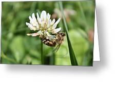 Honeybee On Clover Greeting Card