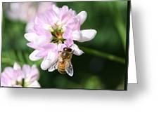 Honeybee On Crown Vetch Greeting Card