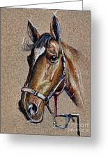 Horse Face - Drawing  Greeting Card