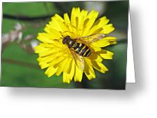 Hoverfly On Dandelion Greeting Card