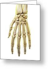 Human Hand Nerves Greeting Card