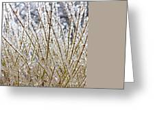 Ice On Branches Greeting Card