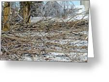 Ice Storm Poplars Greeting Card