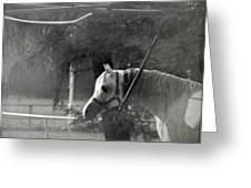 In The Captivity Greeting Card