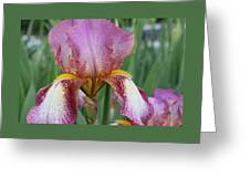 Iris 23 Greeting Card