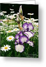 Iris And Daisies Greeting Card