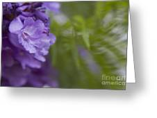 Jacaranda Mimosifolia Makawao Maui Hawaii Greeting Card