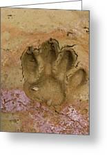 Jaguar (panthera Onca Greeting Card