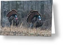 Jake Eastern Wild Turkeys Greeting Card by Linda Freshwaters Arndt