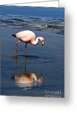 James Or Puna Flamingo Greeting Card