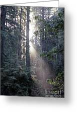 Jedediah Smith Redwoods State Park Redwoods National Park Del No Greeting Card