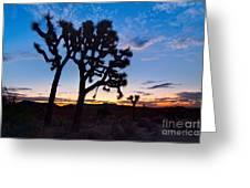 Josua Trees Beautifully Lit During Sunrise In Joshua Tree Nation Greeting Card