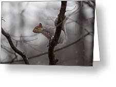 Jumping Squirrel Greeting Card