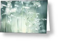 June Green Grass Flowering Greeting Card